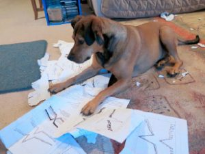 Some reviewers really get their teeth into a manuscript…